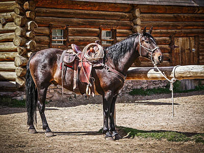 Saddled And Waiting Art Print