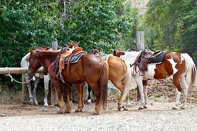 Photograph - Saddled by Athena Mckinzie