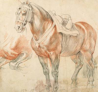 Painting - Saddled  Horse by Pg Reproductions