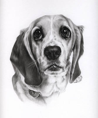 Drawing - Sadie by Natasha Denger