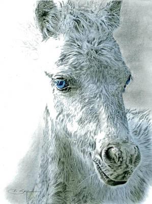 Dachshund Puppy Drawing - Sadies Foal by Elizabeth Sage