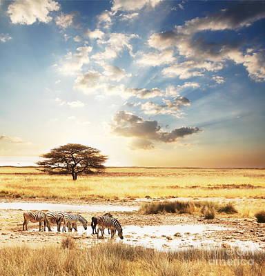 Safari Art Print by Boon Mee