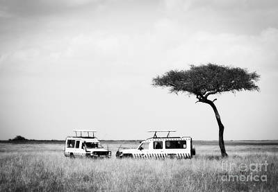 Photograph - Safari Dream by Chris Scroggins