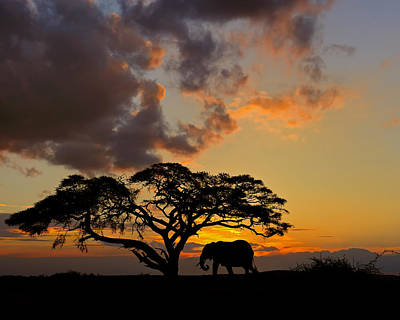 Photograph - Safari Sunset by Tony Beck
