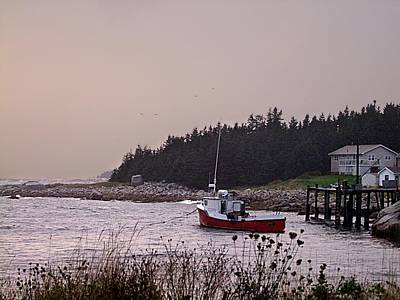 Photograph - Safe Harbour by George Cousins