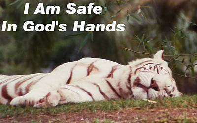 Photograph - Safe In God's Hands by Belinda Lee