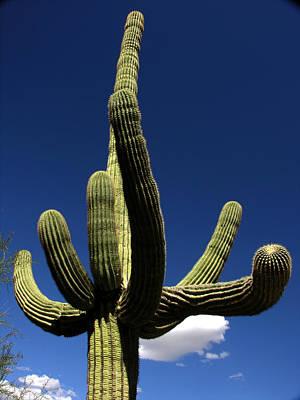 Photograph - Sagauro Cactus by Robert Lozen