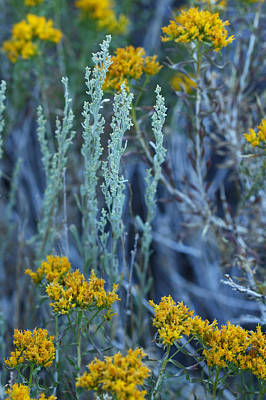 Photograph - Sage And Goldenrod by Melinda Fawver