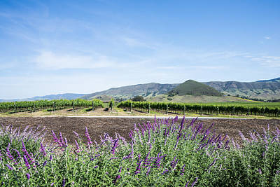 Central Coast Winery Photograph - Sage In Wine Country by Priya Ghose