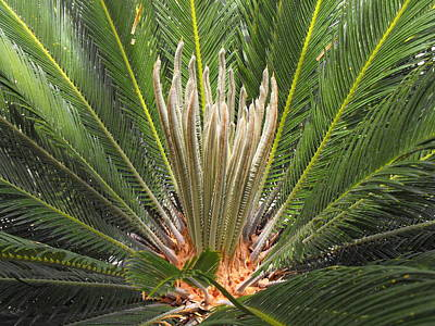 Sago Palm In Bloom Art Print by Rebecca Cearley