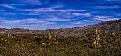 Mark Myhaver Rights Managed Images - Saguaro Afternoon No.2 Royalty-Free Image by Mark Myhaver