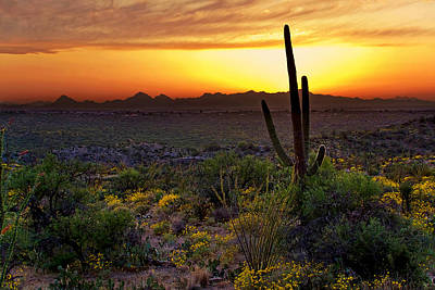 Saguaro And The Setting Sun Art Print