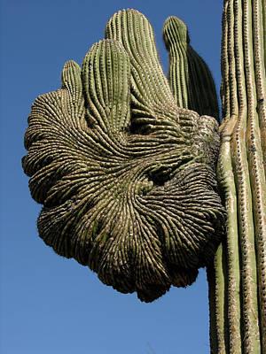 Photograph - Saguaro Arm by Robert Lozen
