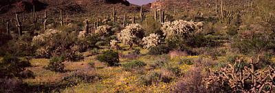 Saguaro Cacti Carnegiea Gigantea Art Print by Panoramic Images
