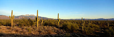 Arid Life Photograph - Saguaro Cacti In A Desert, Four Peaks by Panoramic Images