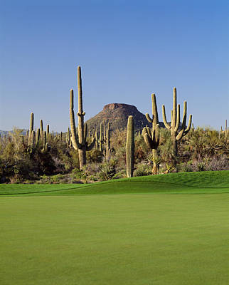 Saguaro Cactus Photograph - Saguaro Cacti In A Golf Course, Troon by Panoramic Images