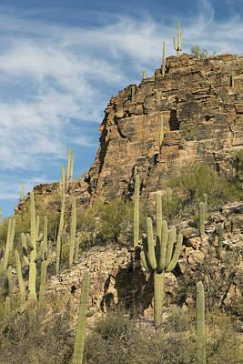 Sabino Photograph - Saguaro Cacti Sabino Canyon by Kevin Schafer