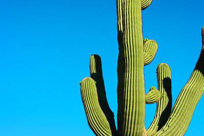 Photograph - Saguaro Cactus And Deep Blue Desert Sky by Dszc