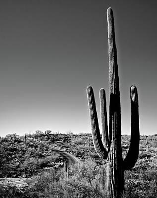 Photograph - Saguaro Cactus by Cameron Davidson