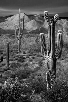 Desert Sunset Photograph - Saguaro Cactus In Black And White At Sunset by Dave Dilli