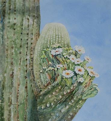 Painting - Saguaro Cactus In Bloom by Marilyn  Clement