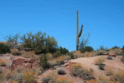 Photograph - Saguaro Cactus by Kathleen Scanlan