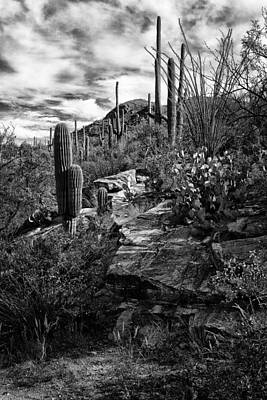 Photograph - Saguaro Cactus Sabino Canyon Dsc08307 by Greg Kluempers