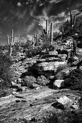 Photograph - Saguaro Cactus Sabino Canyon Dsc08320 by Greg Kluempers
