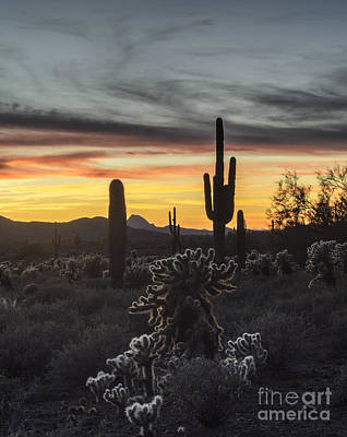Photograph - Saguaro Cactus Sunset by Tamara Becker
