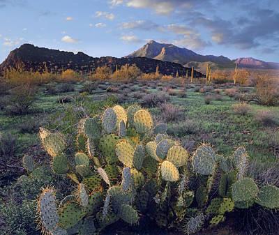 Saguaro Cactus Art Print by Tim Fitzharris