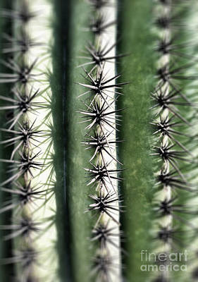 Saguaro Catus Needles Art Print