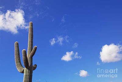 Photograph - Blue Sky Saguaro  And Clouds by Yva Momatiuk and John Eastcott
