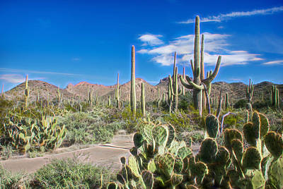 Photograph - Saguaro National Park by Barbara Manis