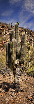 Saguaro Cactus Photograph - Saguaro Of Many Arms by Heather Applegate