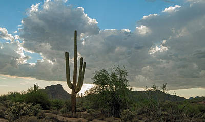 Photograph - Saguaro Rising by Tam Ryan