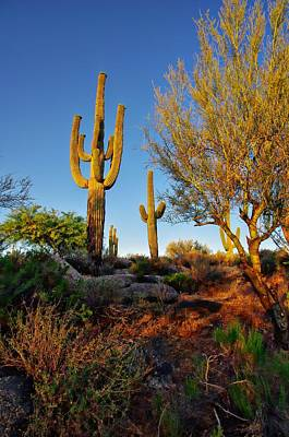 Scottsdale Photograph - Saguaro  by Scott McGuire