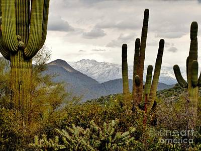 Mesquite Tree Photograph - Saguaro Sentinels by Marilyn Smith