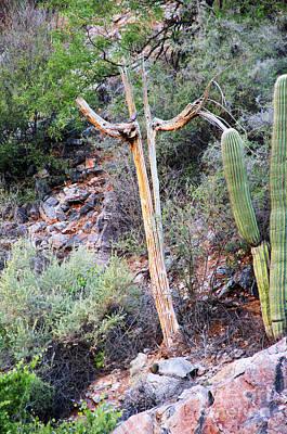 Saguaro Skeleton Art Print