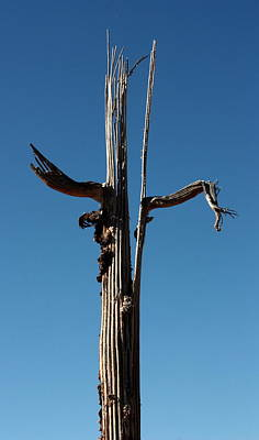 Photograph - Saguaro Skeleton by Joe Kozlowski