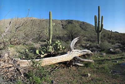 Rincon Mountains Wall Art - Photograph - Saguaro Skeleton Saguaro National Park Az  by Brian Lockett