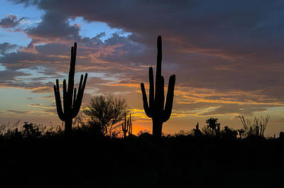Photograph - Saguaro Sunset by Tam Ryan