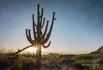 Photograph - Saguaro Sunstar by Marianne Jensen
