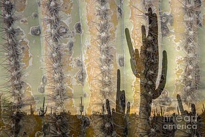 Photograph - Saguaro Texture by Marianne Jensen