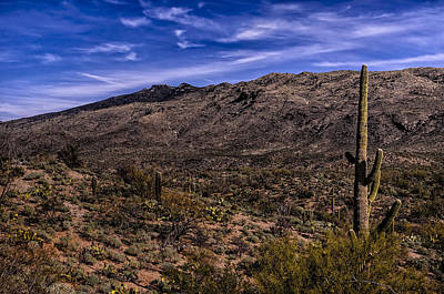 Mark Myhaver Photo Rights Managed Images - Saguaro View No.1 Royalty-Free Image by Mark Myhaver