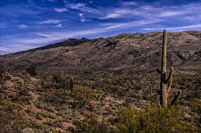Mark Myhaver Rights Managed Images - Saguaro View No.2 Royalty-Free Image by Mark Myhaver