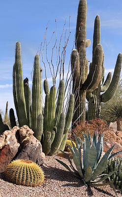 Carefree Arizona Photograph - Saguaros And Such by Gordon Beck
