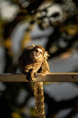 Photograph - Sagui Monkey by Celso Diniz