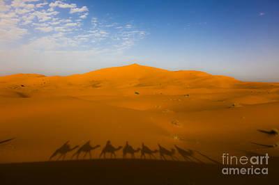 Camel Photograph - Sahara by Derek Selander