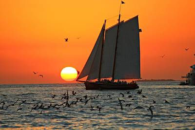 Photograph - Sail Into The Sunset by Jo Sheehan