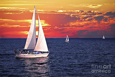 Animal Paintings David Stribbling Royalty Free Images - Sailboats at sunset Royalty-Free Image by Elena Elisseeva